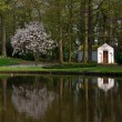Reflection of blooming magnolia tree — Stock Photo