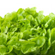 Close up of butterhead lettuce (macro) — Stock Photo