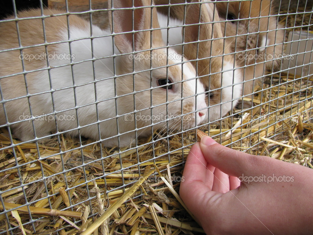 Как кормить декоративного кролика в домашних условиях 211