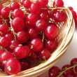 Red currants — Stock Photo #2454842