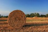 Harvesting the crop — Stock Photo