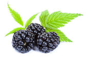 Blackberries with leaves — Stock Photo