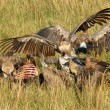 Vultures eating an antelope Gnu — Stock Photo
