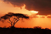 Beautiful african sunset — Stock Photo
