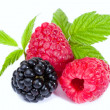 Mixed Raspberies and Blackberry with leaves - Stock Photo