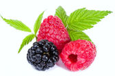 Mixed Raspberies and Blackberry with leaves — Stock Photo
