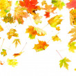Falling Leaves — Stock Photo #2225808