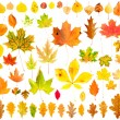 Autumn Leaves Collection — Stock Photo