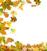 Multi Colored Autumn Leaves — Stock Photo