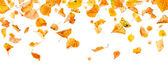 Panoramic Autumn Leaves — Stock Photo