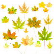 Autumn Maple Leaves Collection — Stock Photo