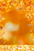 Falling Leaves Frame — Stock Photo