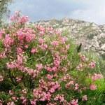 Mountan flowers — Stock Photo