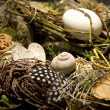 Foto de Stock  : Easter Nest
