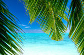 View to a tropical beach — Stock Photo
