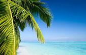 Palm tree leafs on a tropical beach — Stockfoto