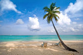Beach, sea and coconut palm tree — 图库照片