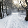 Winter alley — Stock Photo #2165389
