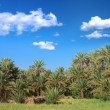 Stock Photo: Palm trees and cumulus clouds
