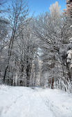Footpath in winter forest — Stock Photo