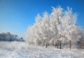 Hoarfrost on trees and bushes — Stock Photo