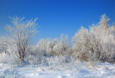 Wild winter scenery with hoarfrost — Stock Photo