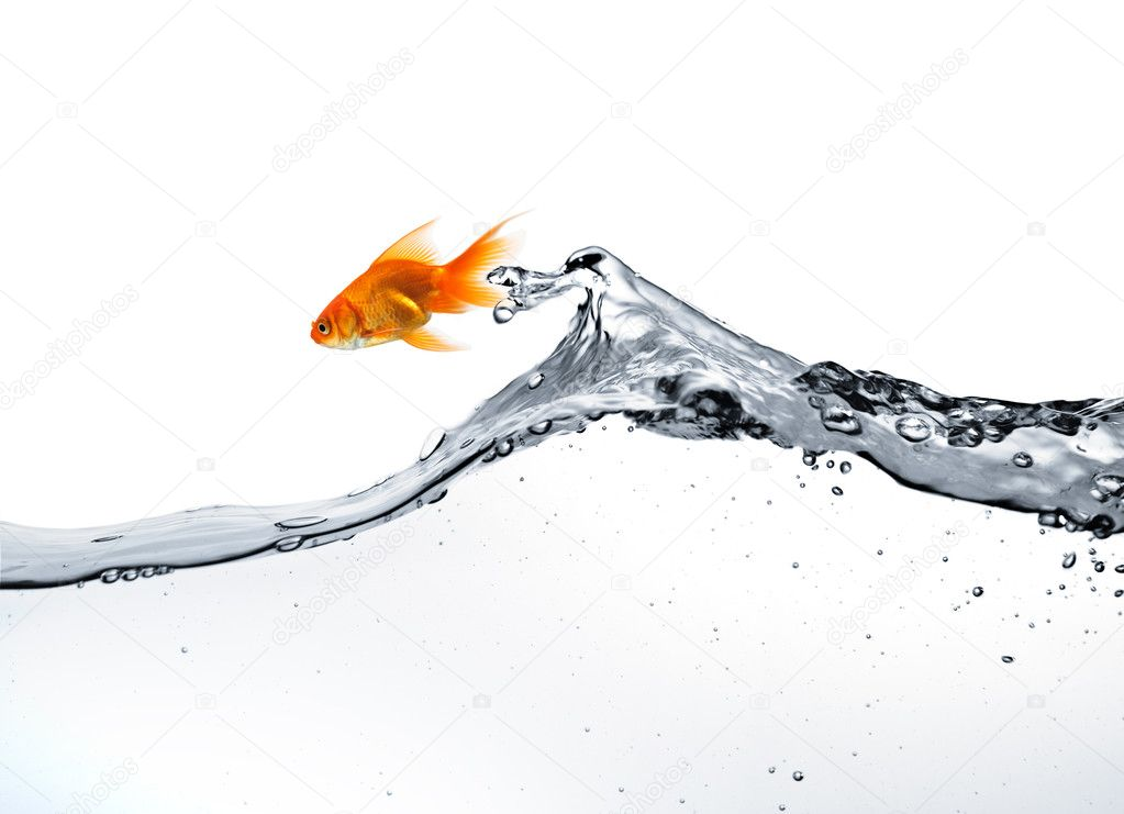 Goldfish jumping out of the water, isolated on white — Stock Photo #2166525