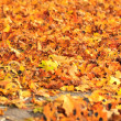 Sea of dry fall leaves — Stock Photo