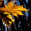 Yellow autumn leaf — Stock Photo