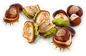 Group of chestnuts — Stock Photo