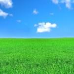 Peaceful grassland — Stock Photo