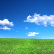 View of peaceful grassland — Stock Photo