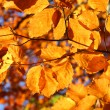 Vivid fall leaves — Stock Photo