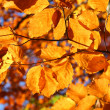 Stock Photo: Vivid fall leaves