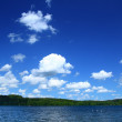 Lakeside with tree line — Stock Photo