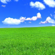 Panoramic view of peaceful grassland — Stock Photo