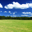 Summer country view — Stock Photo #2200108