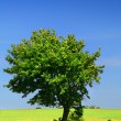 Green grass field and a lonely tree - Stock Photo