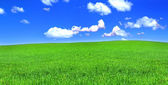 Panoramic view of peaceful grassland — Stock Photo