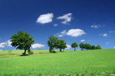 Blissful summer landscape with tree line — Stock Photo