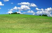 Freshly mowed lawn — Stock Photo