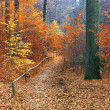 Path in beautiful fall forest — Stock Photo