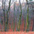 Stock Photo: Mystic autumn forest
