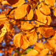 Stock Photo: Bright vivid fall leaves