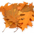 Stock Photo: Dry oak leaves