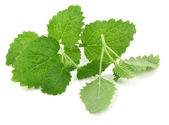 Fresh lemon balm on white — Stock Photo