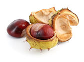 Chestnuts on white — Stock Photo