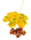 Group of acorns and maple leaf — Stock Photo