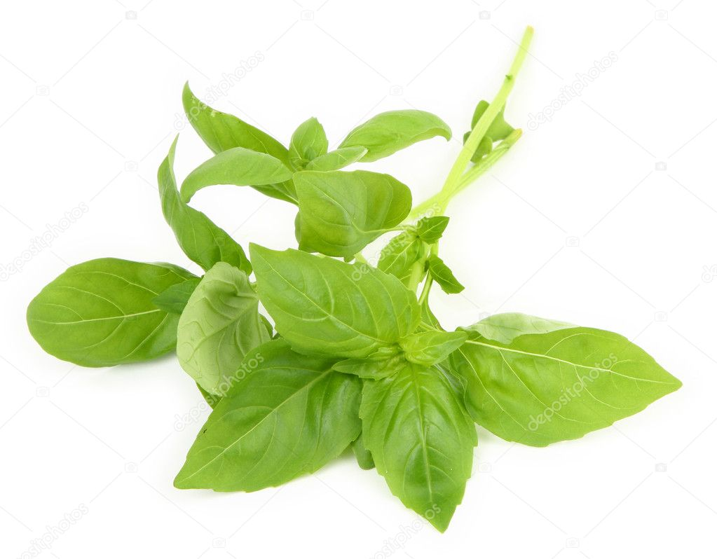Young fresh basil leaves on white background, minimal shadow underneath — Stock Photo #2218666