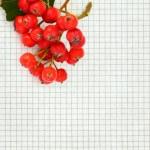 Rowan berries on paper — Stock Photo